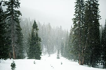 Green trees under snow during daytime