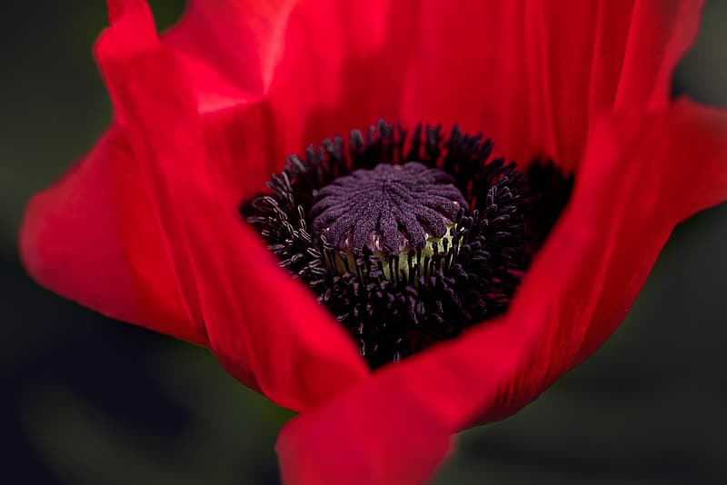 Closeup photo of red petaled flower