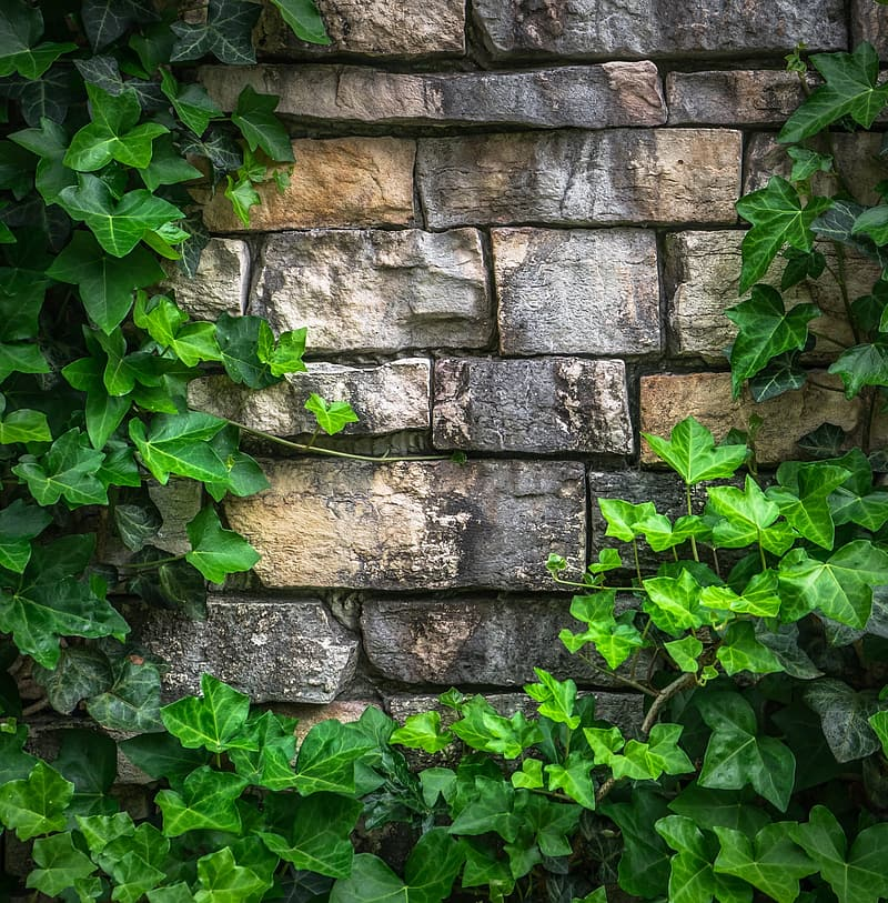 Brown brick wall surrounded with vine plants