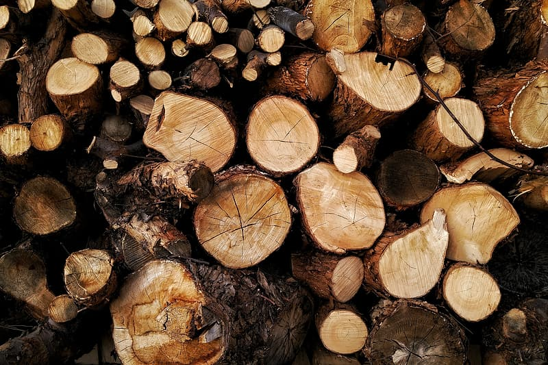 Chopped wood tree logs from forest