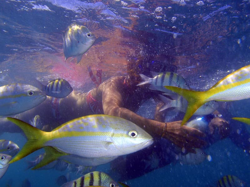 Woman swimming with gray and yellow fish