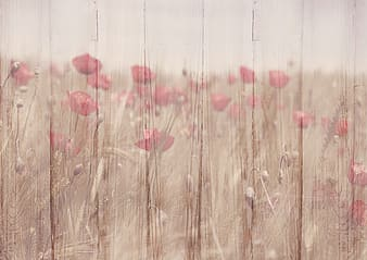 Landscape photography of flowers