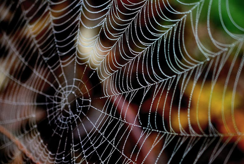 Black white and orange spider web