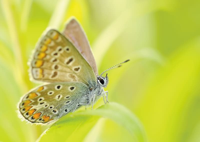 Closeup photography of summer azure butterfly perching on green leaf during daytime