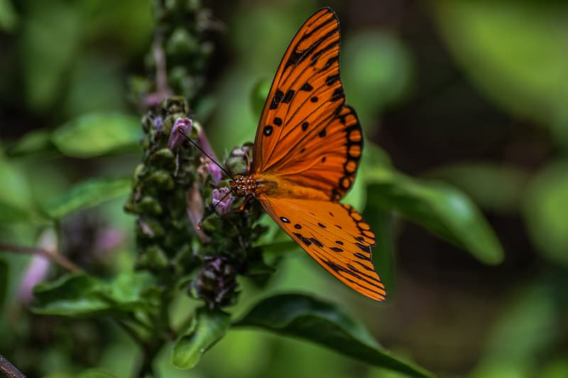 Orange and black butterfly perched on purple flower