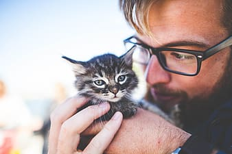 Person holding brown tabby kitten