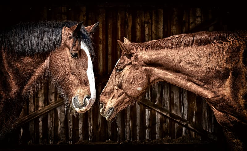 Brown horse in brown wooden cage