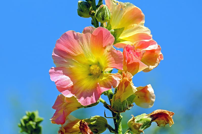Closeup photography pink-and-yellow clustered flower