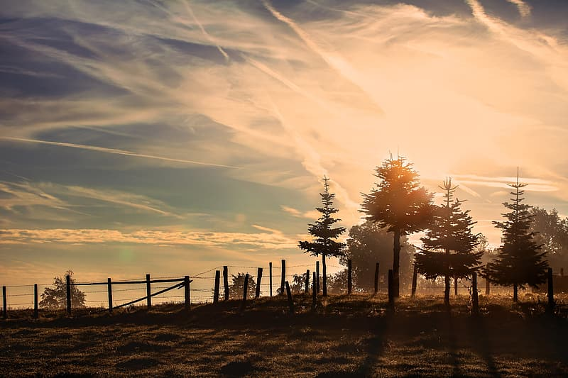 Landscape photo of barbed wire fence with trees