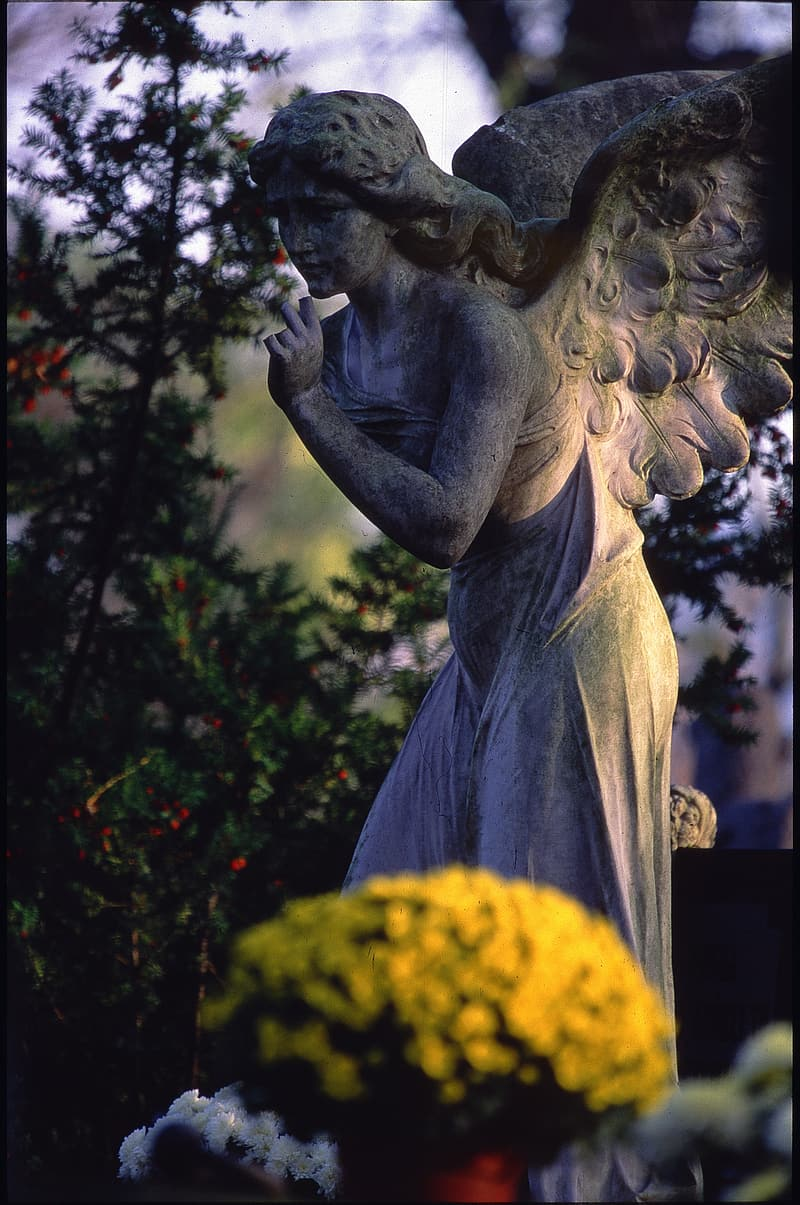 Angel concrete statue near green leafed plant