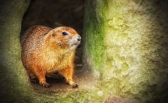 Brown mammal on cave