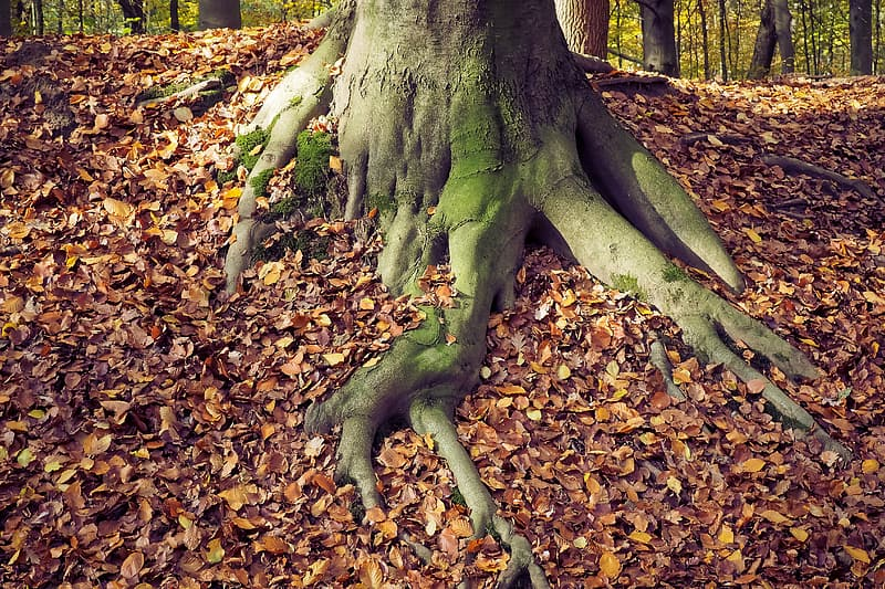 Green tree surrounded by dried leaves