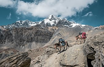 Let´s go hiking., two brown horses on mountain