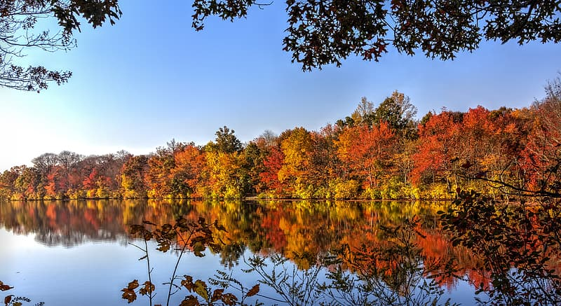 Brown trees near body of water under blue sky