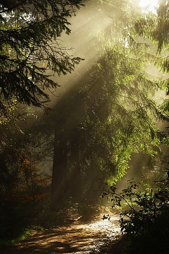 Sunlight and green leafed trees