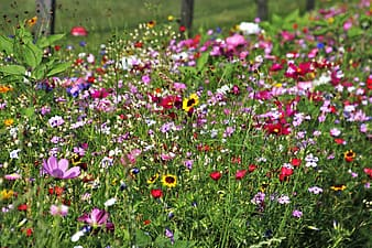 Red, flower, and yellow flower plants on grass field