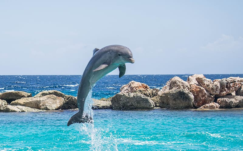 Dolphin showing some stunts under sunny sky