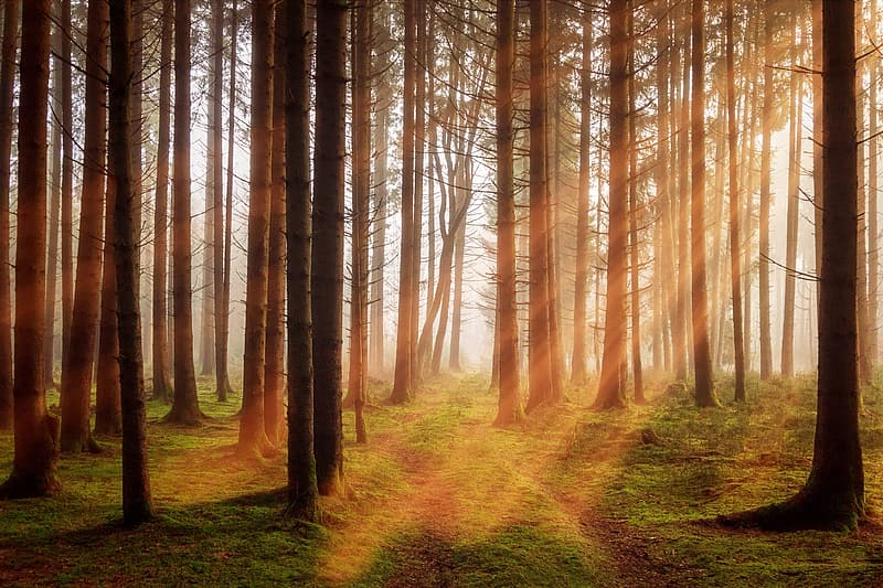 Forest with light rays photo