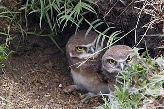 Two brown owls under green plants