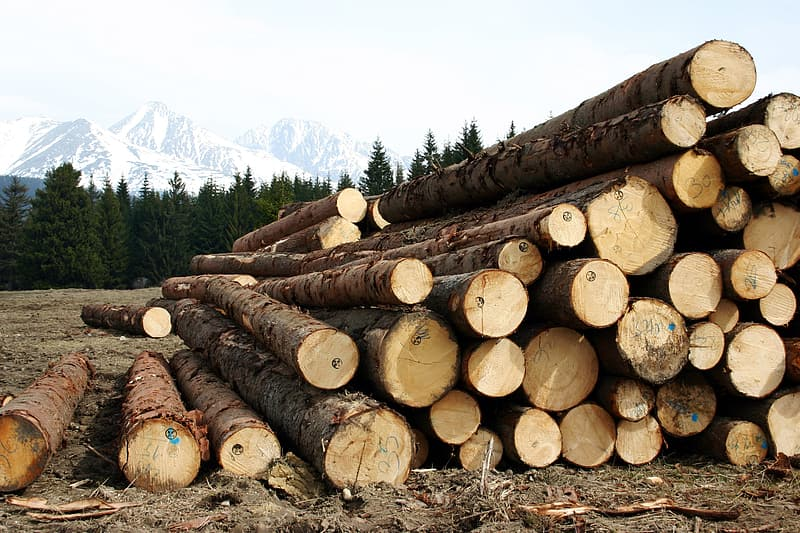Brown wood logs on green grass field during daytime
