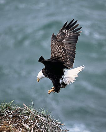 Eagle flying near grass