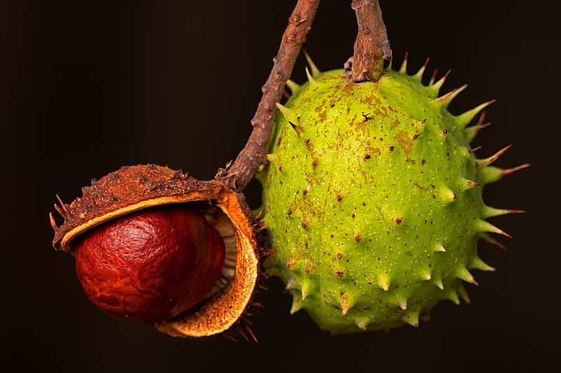 Green fruit on brown wooden stick