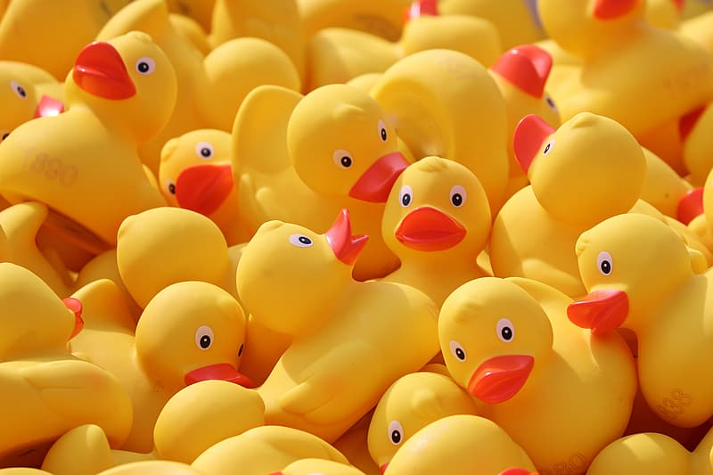 Yellow and pink rubber duck toys