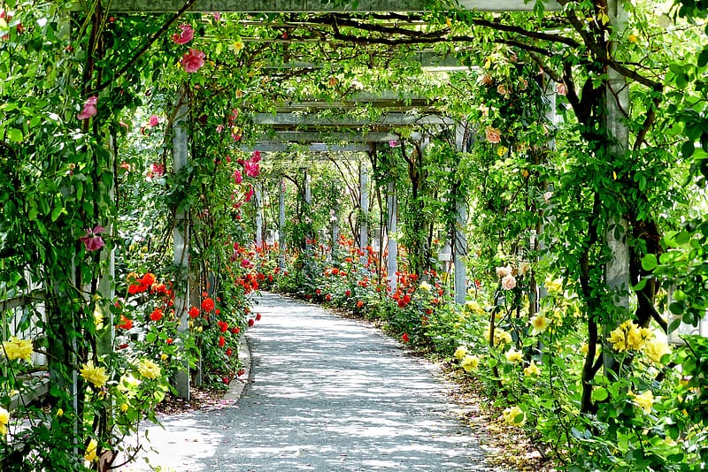 Garden pathway during daylight