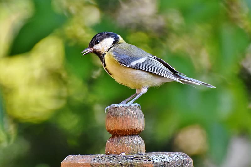 Yellow black and white bird on brown wooden fence during daytime