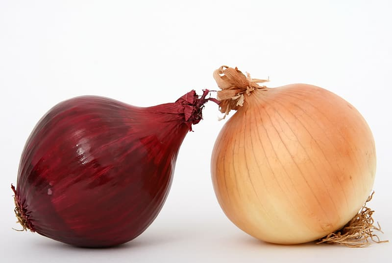 Two red and white onion bulbs with white background
