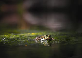 Brown frog on green moss in water
