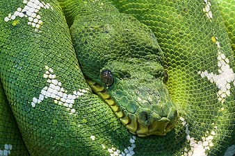 Closeup photo of green and white snake