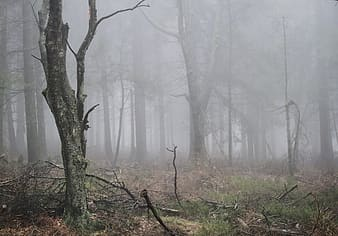 Withered forest trees covered in fog