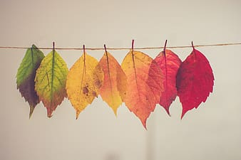 Assorted-color hanging leaves photograph