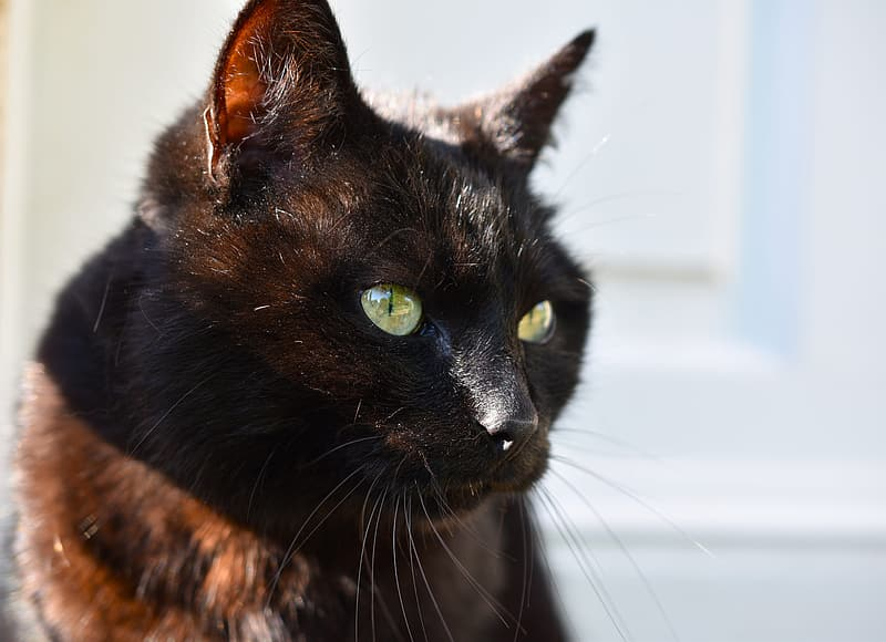 Black and brown cat in close up photography
