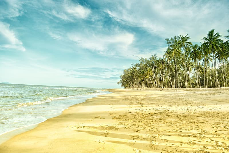 Shoreline near coconut trees and bodies of water photograph
