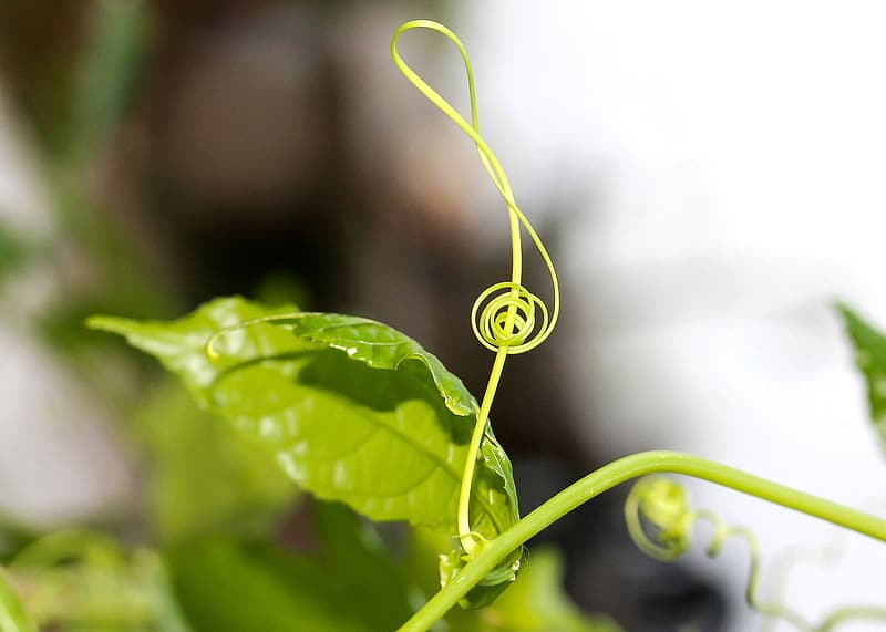 Selective focus photography of green leaf