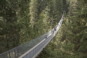 High-angle photography of people crossing hanging bridge surrounded with trees