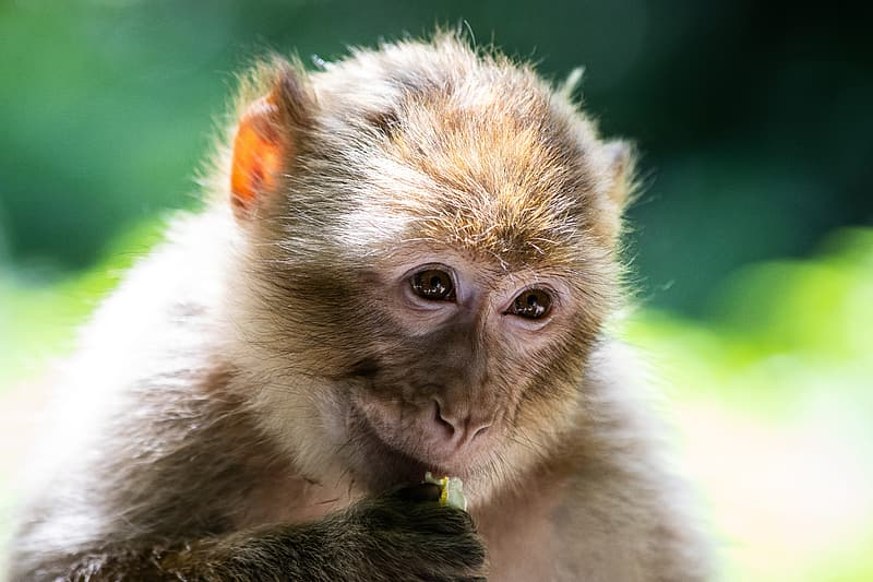 Brown and white monkey on green grass during daytime