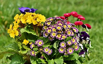 Yellow purple and red flowers