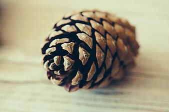 Brown pinecone on brown surface