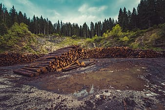 Pile of brown logs surrounded with trees