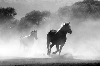 Grayscale photography of two horses running