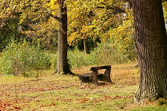 Brown wooden bench surrounded by green leaf trees at daytime
