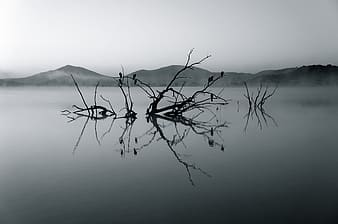 Gray scale photo of tree in water