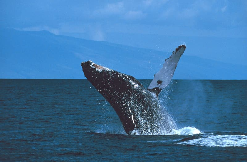 Whale on body of water during daytime