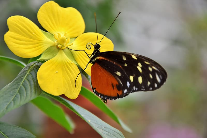 Brown and black with white spot butterfly perched on yellow flower during daytime