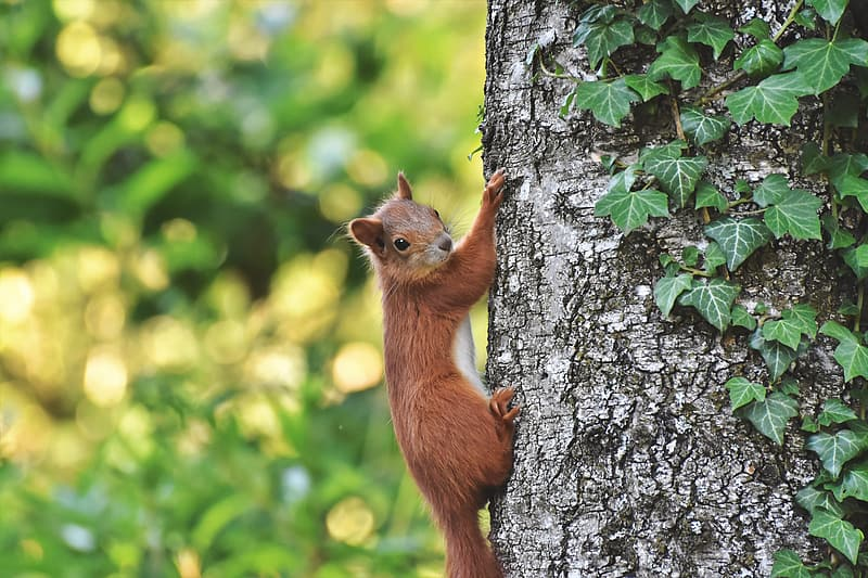 Brown squirrel on tree trunk during daytime