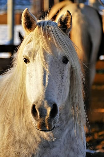Photo of white horse