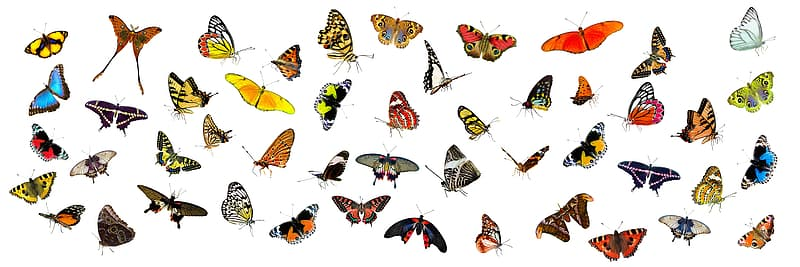 Assorted-color butterfly lot
